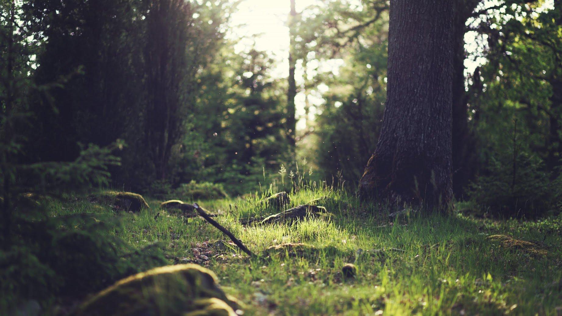 Hình nền máy tính 4k thiên nhiên và rừng rậm