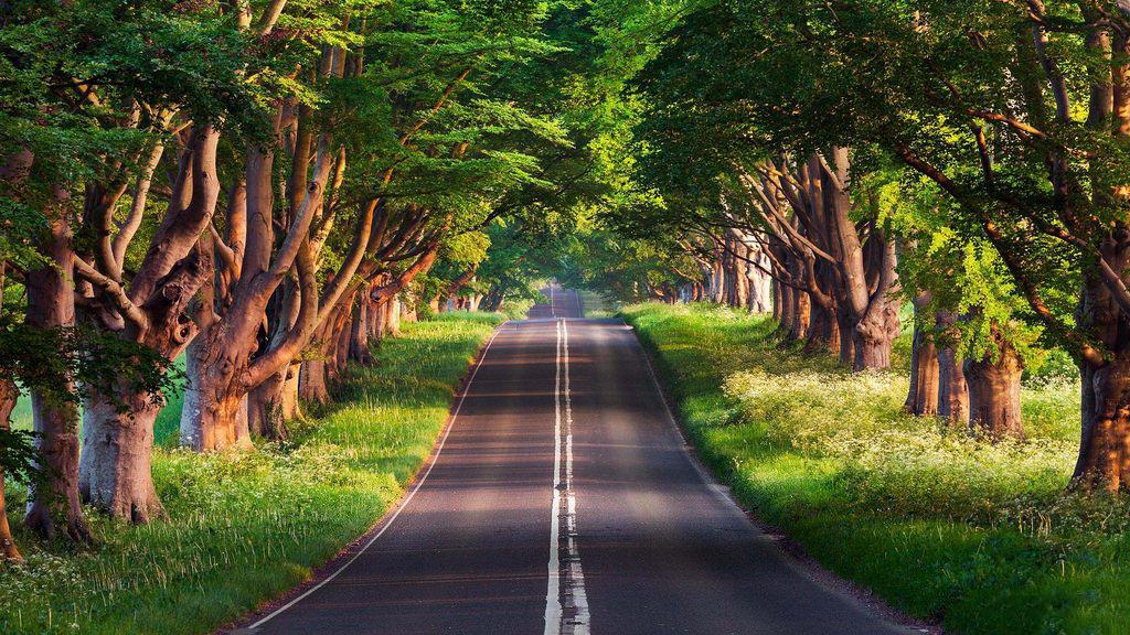 Ảnh nền 4k cho pc về con đường trong xanh