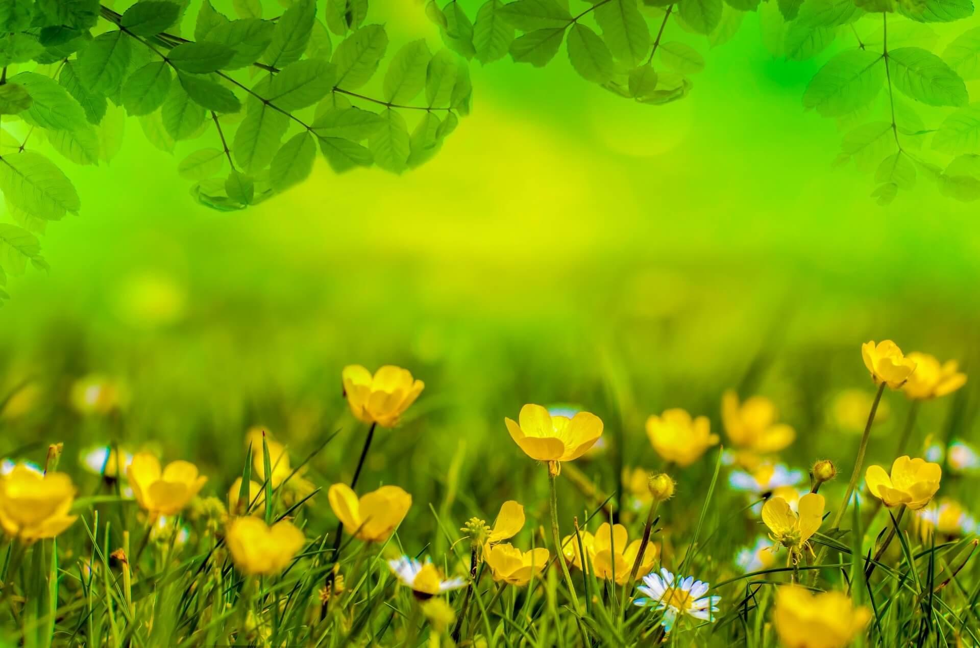Background nền đẹp với hoa vàng