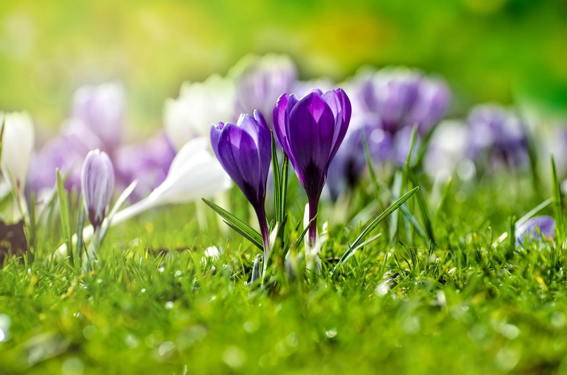 Bg đẹp với màu hoa tím