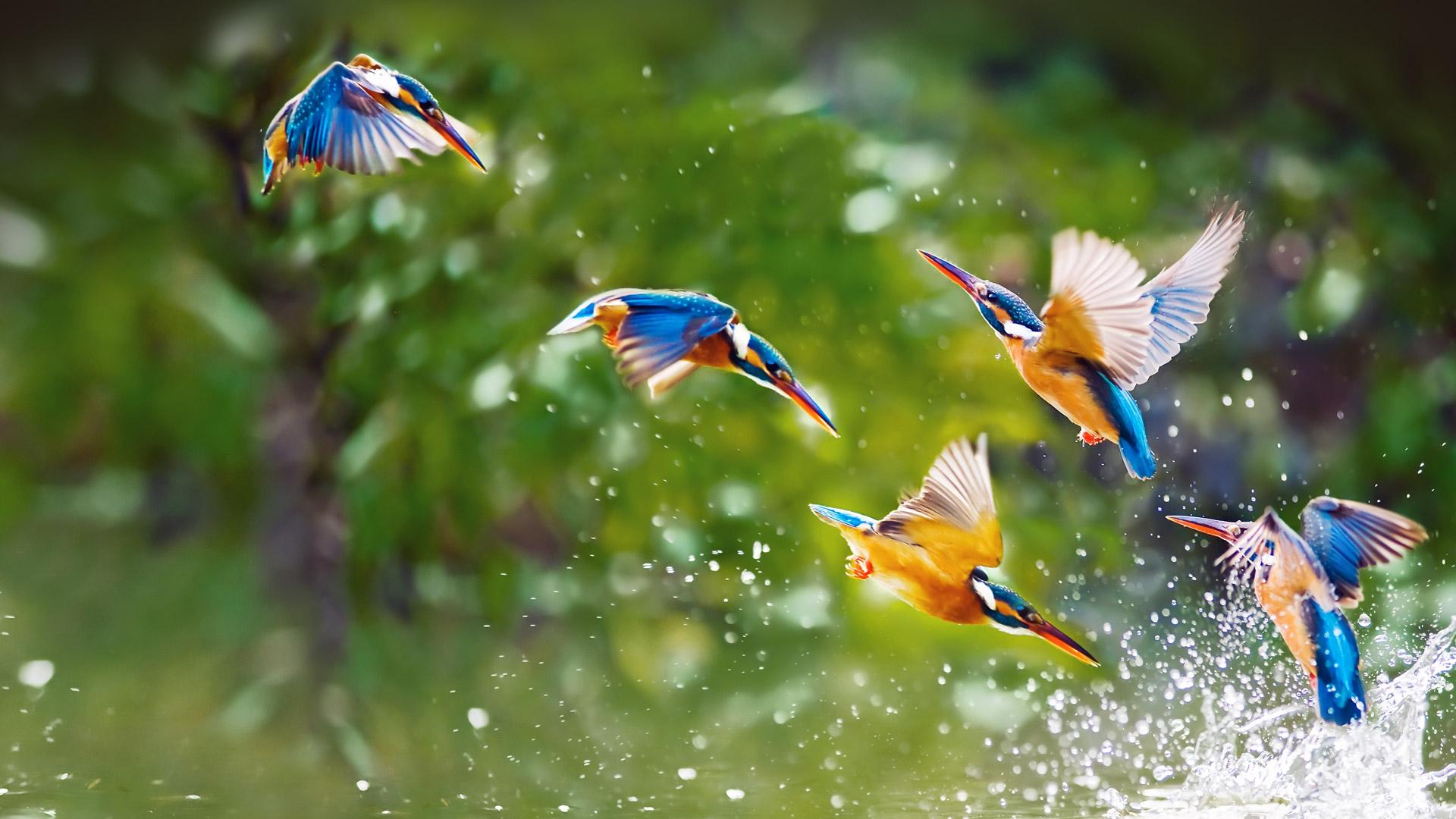 Hình background đẹp những chú chim vui đùa